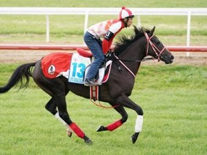 Cox Plate equal fav to have Valley gallop