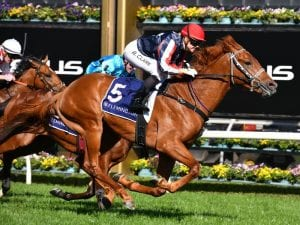 Cox Plate has 35 remaining in contention