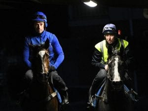 Flit draws barrier two in 1000 Guineas