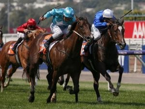 Flit a dominant Thousand Guineas favourite