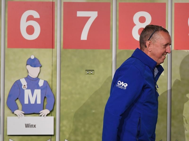 Winx part-owner Peter Tighe