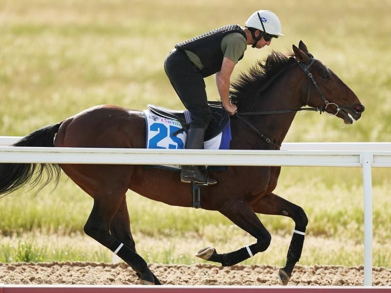Accomplished stayer Marmelo has been retired to stud.