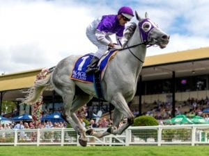 The Candy Man is expected to put in a strong showing in the Australian Turf Club Trophy