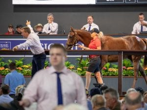Magic Millions Yearling Sale