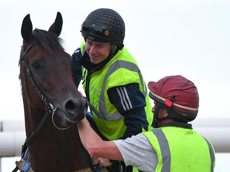 Damian Lane rides Catalyst during track work at Mornington