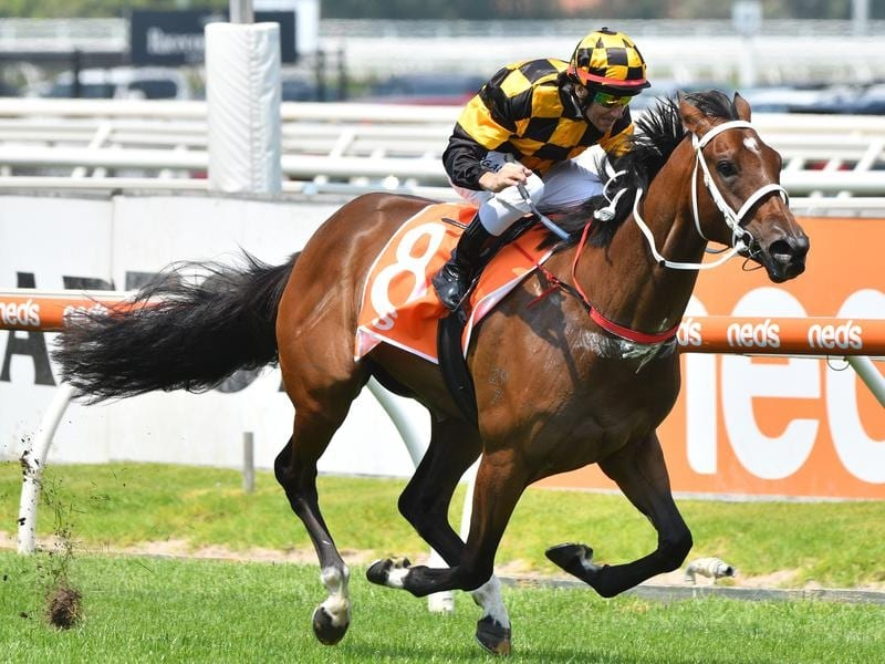 Letzbeglam is rated one of the best hopes in the Blue Diamond Stakes.