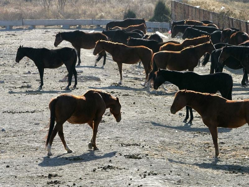 Horses in a yard.