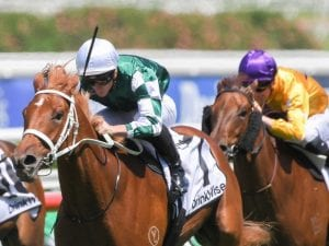Free tips for the Pharlap Stakes - Hungry Heart is favourite to win
