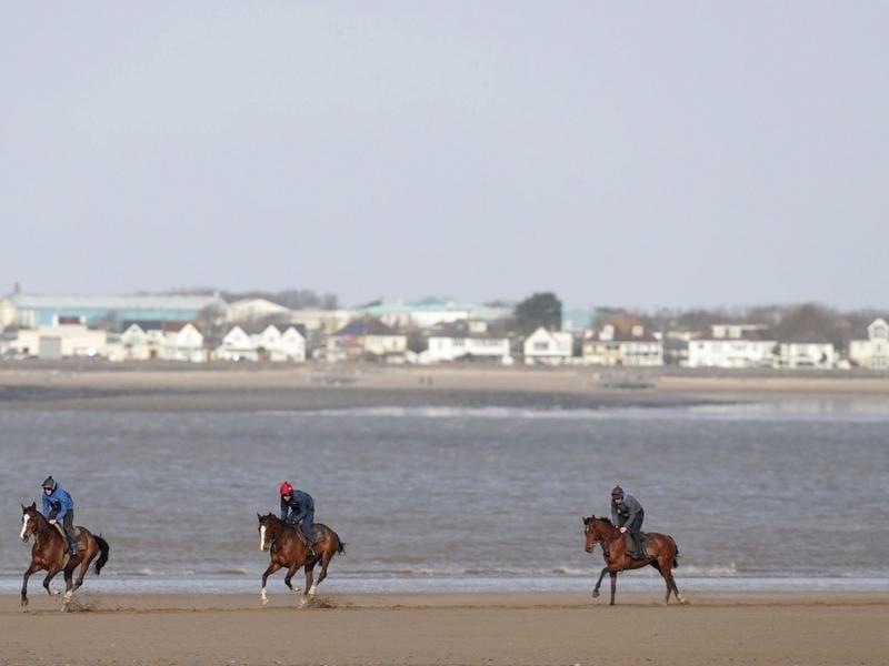 horses exercising in Britain