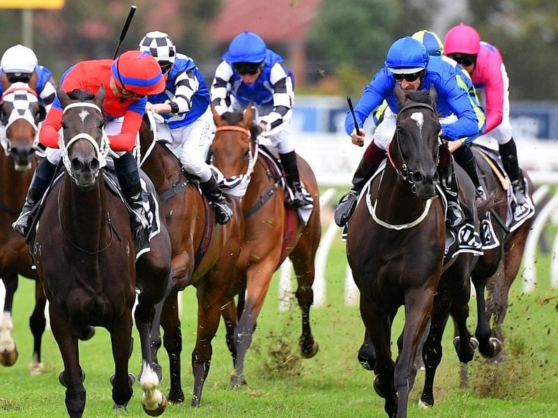 The finish to the 2020 Tancred Stakes.