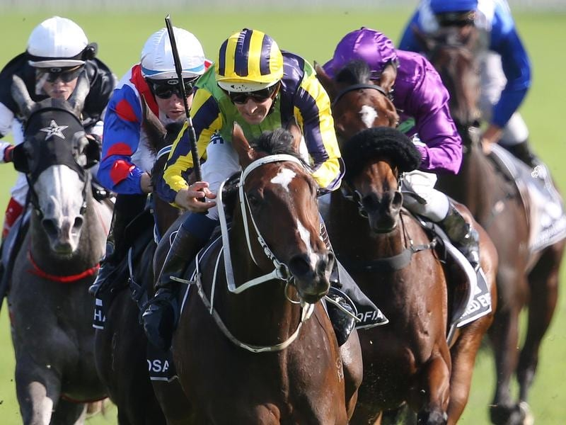 How to bet on horse races nz mobile betting app