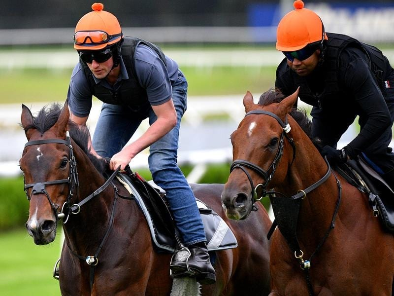 Stablemates Young Rascal (left) and Addeybb gallop at Canterbury.