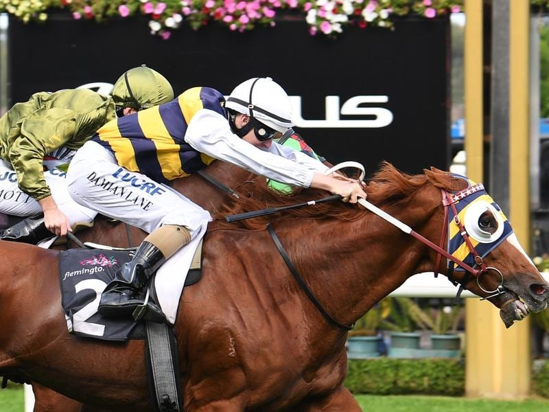 Sydney Cup contender Gallic Chieftain.