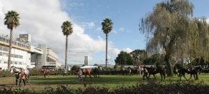 Avondale racecourse