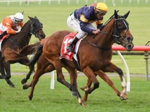 Buffalo River is a key chance in the Ajax Stakes on saturday