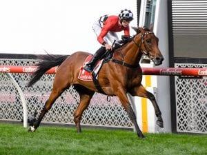 Too Close The Sun horse racing news