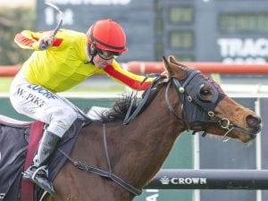 Velvet King horse racing news