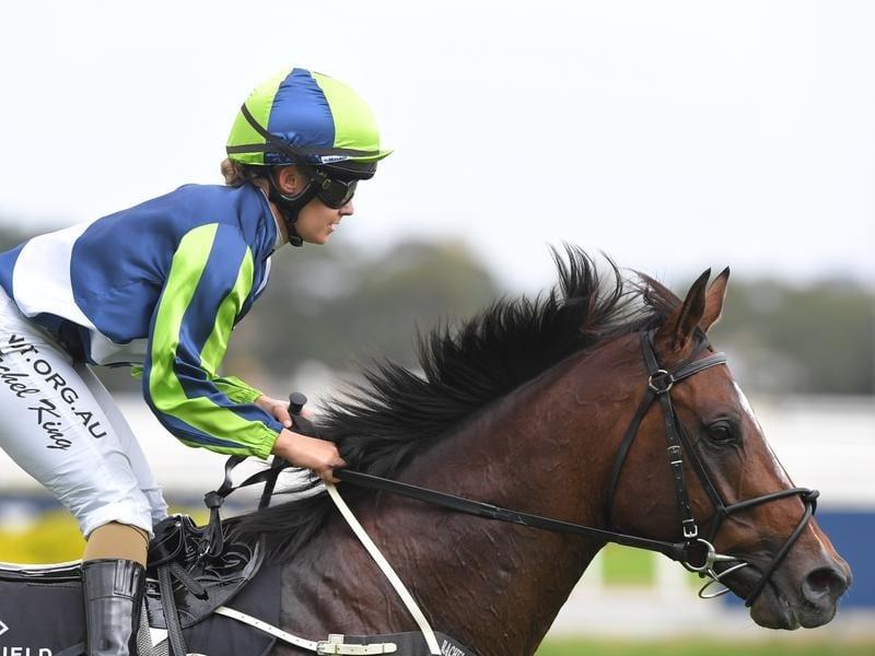 Hobartville Stakes winner Brandenburg.