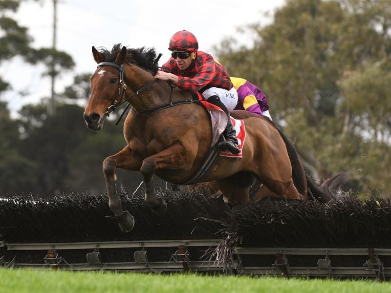 Tallyho Twinkletoe to lug heavy weight in Grand National Hurdle