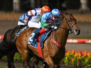 Scales Of Justice can win the Australia Stakes on Friday at Moonee Valley