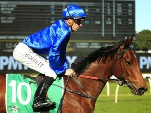 Tailleur is one of the main hopes in the Triscay Stakes on Saturday