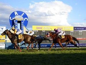 Grafton horse racing