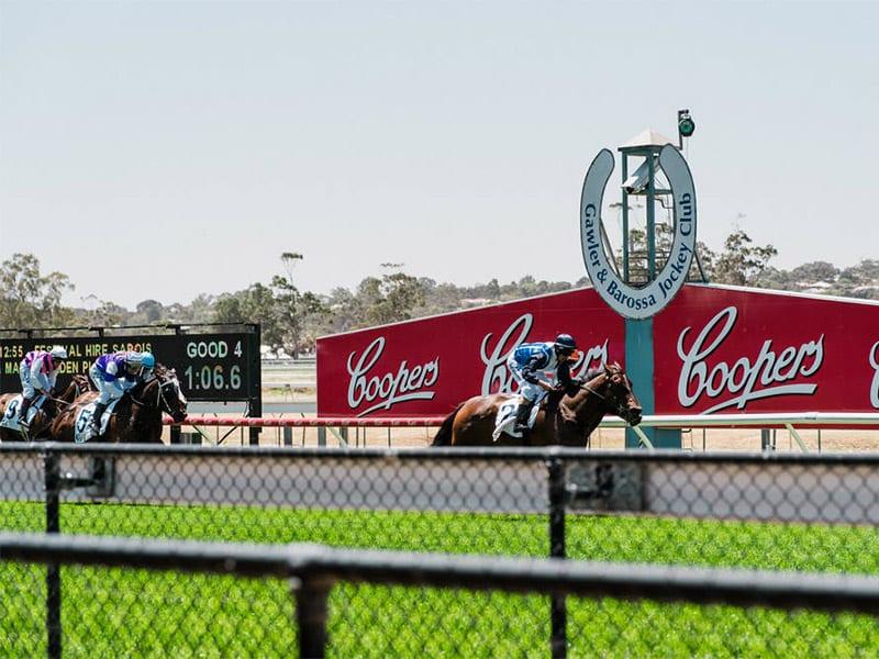 Gawler horse racing