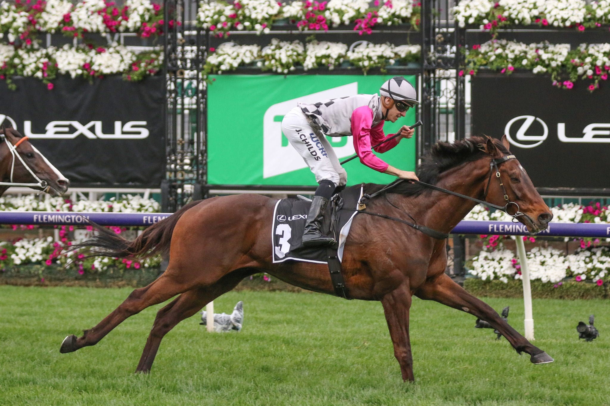 Can Surprise Baby Win The 2020 Melbourne Cup