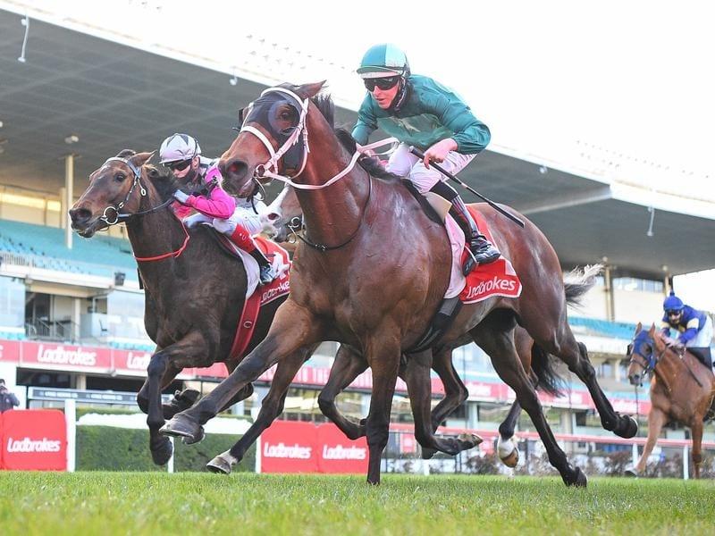 far hills races betting odds