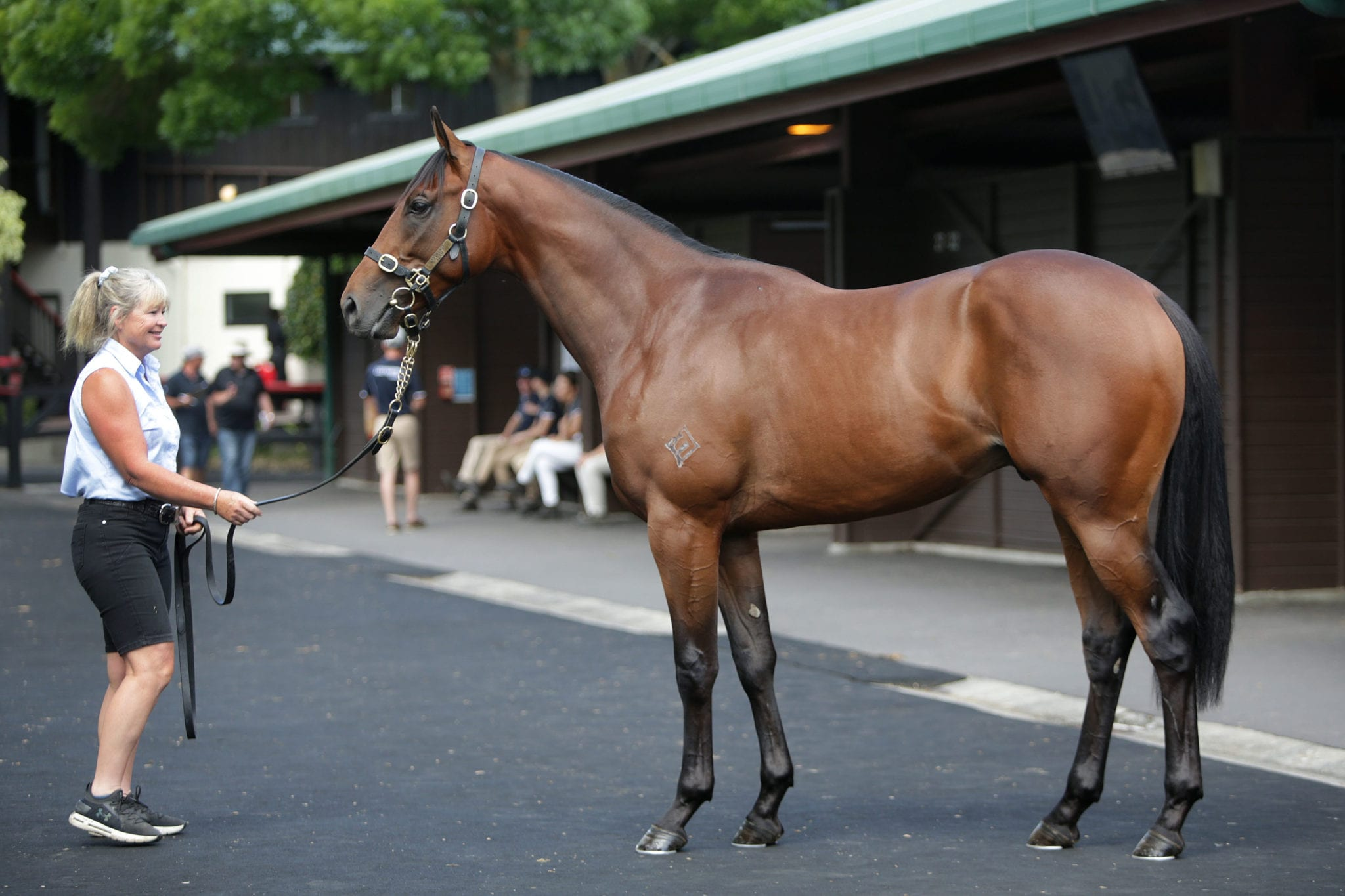 Exceed and Excel colt