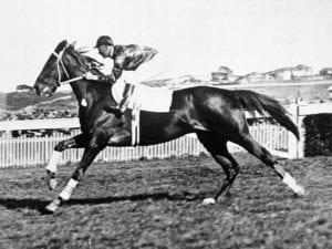 Phar Lap - Great Australian racehorses