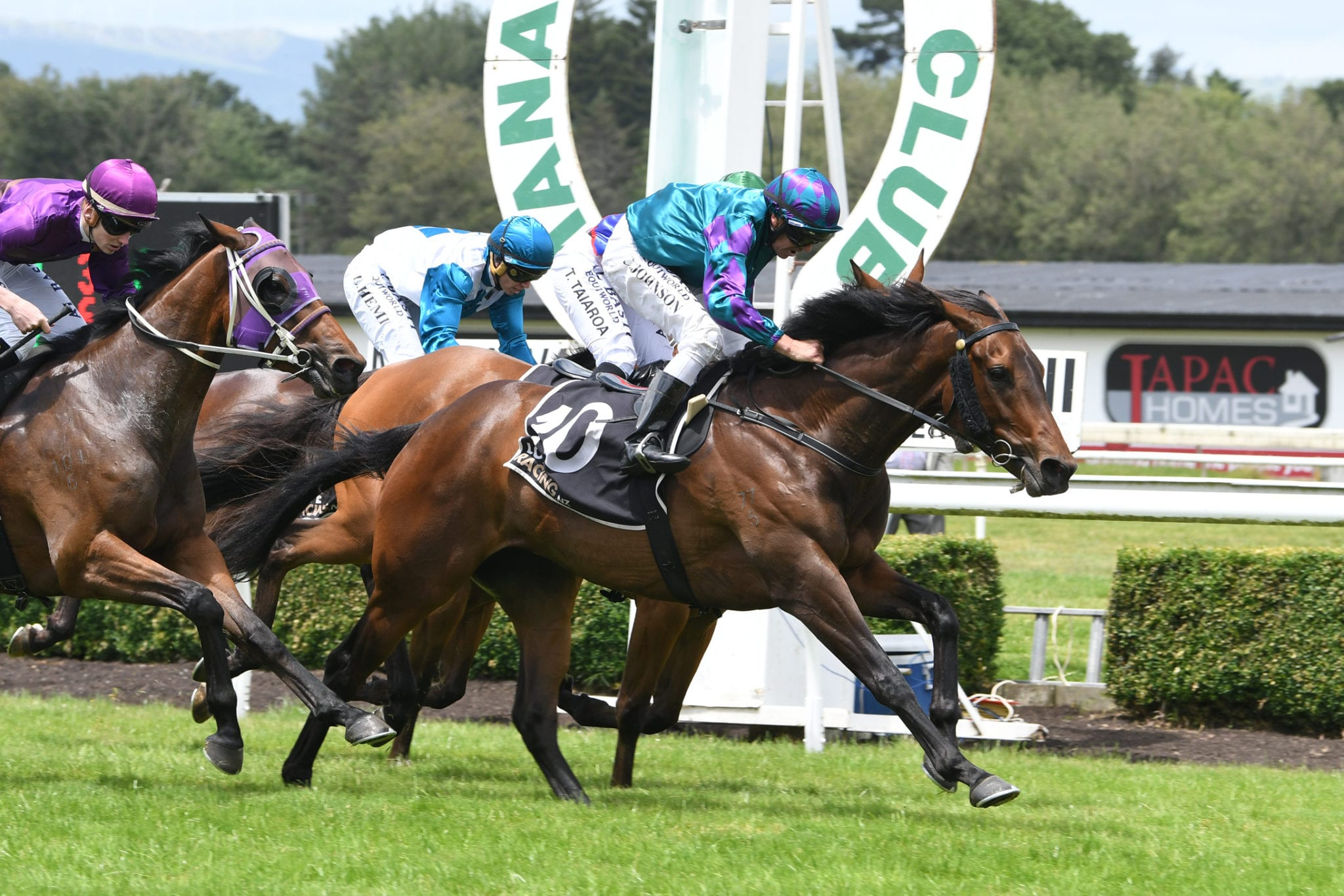 Nz 1000 guineas betting betting odds super bowl safety first score