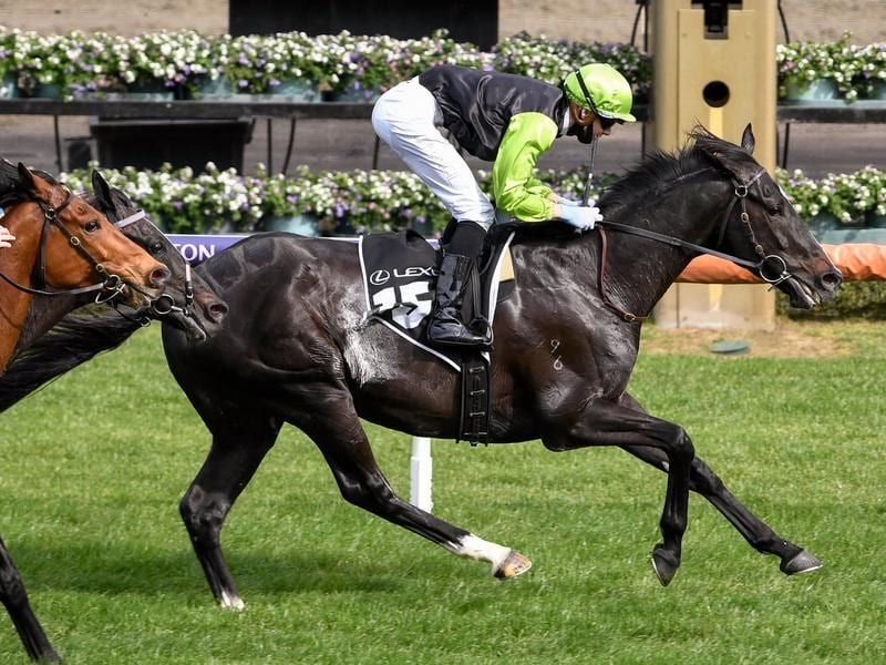 Who to bet on melbourne cup 2021 scotbet golf betting system