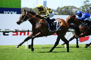 2021 Todman Stakes betting preview & tips | Randwick Race 2