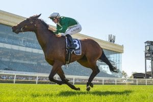 Najmaty is one of the main hopes in the Percy Sykes Stakes on Saturday