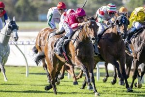Northam Stakes preview, odds and betting strategy | WA 2/5