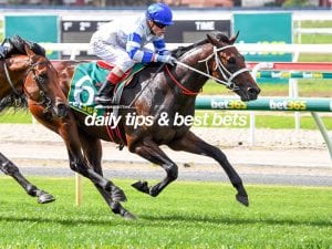 Geelong betting tips, quaddie picks & value bets | 18/6/2021