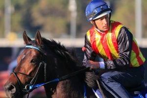 2021 JJ Atkins betting tips, best odds & form guide   Eagle Farm