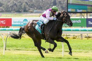 Mornington Glory wins on debut